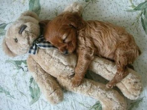 puppy-cuddles-teddy-bear