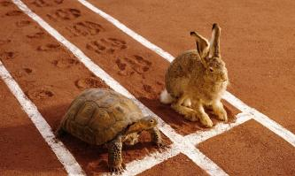 Tortoise-and-hare-014.jpg