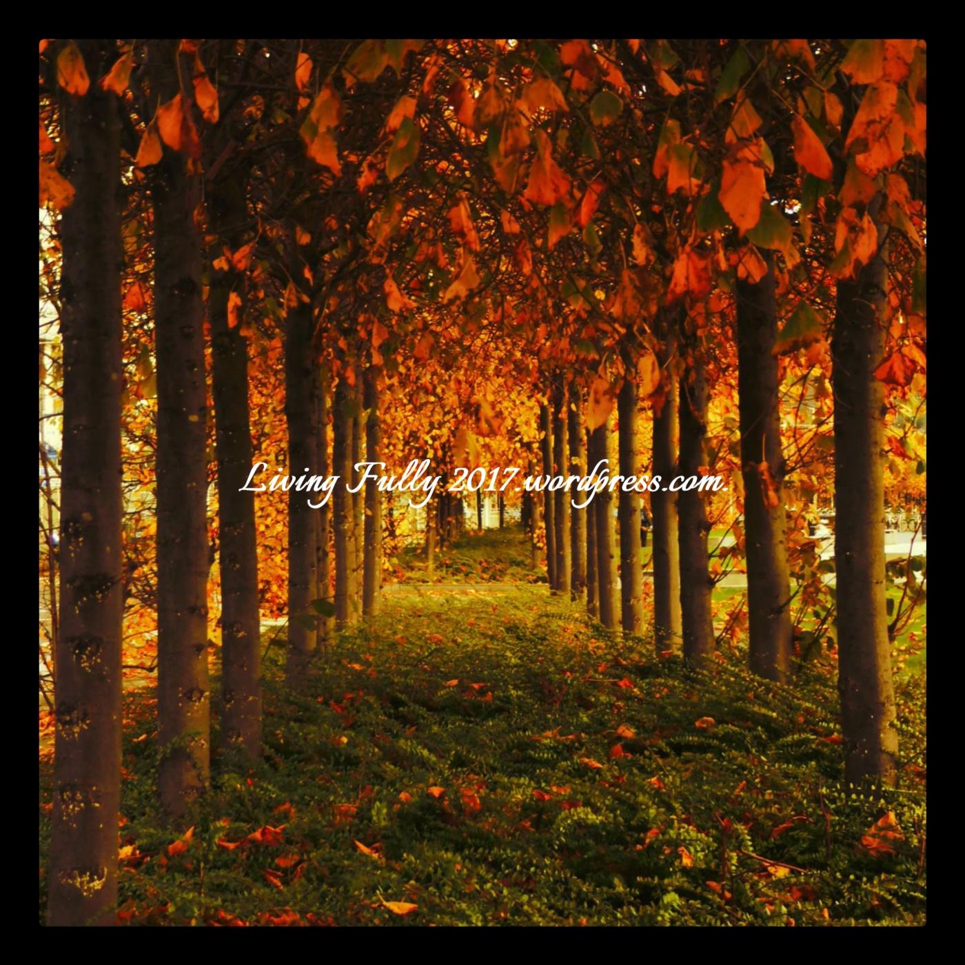 tree avenue.jpg