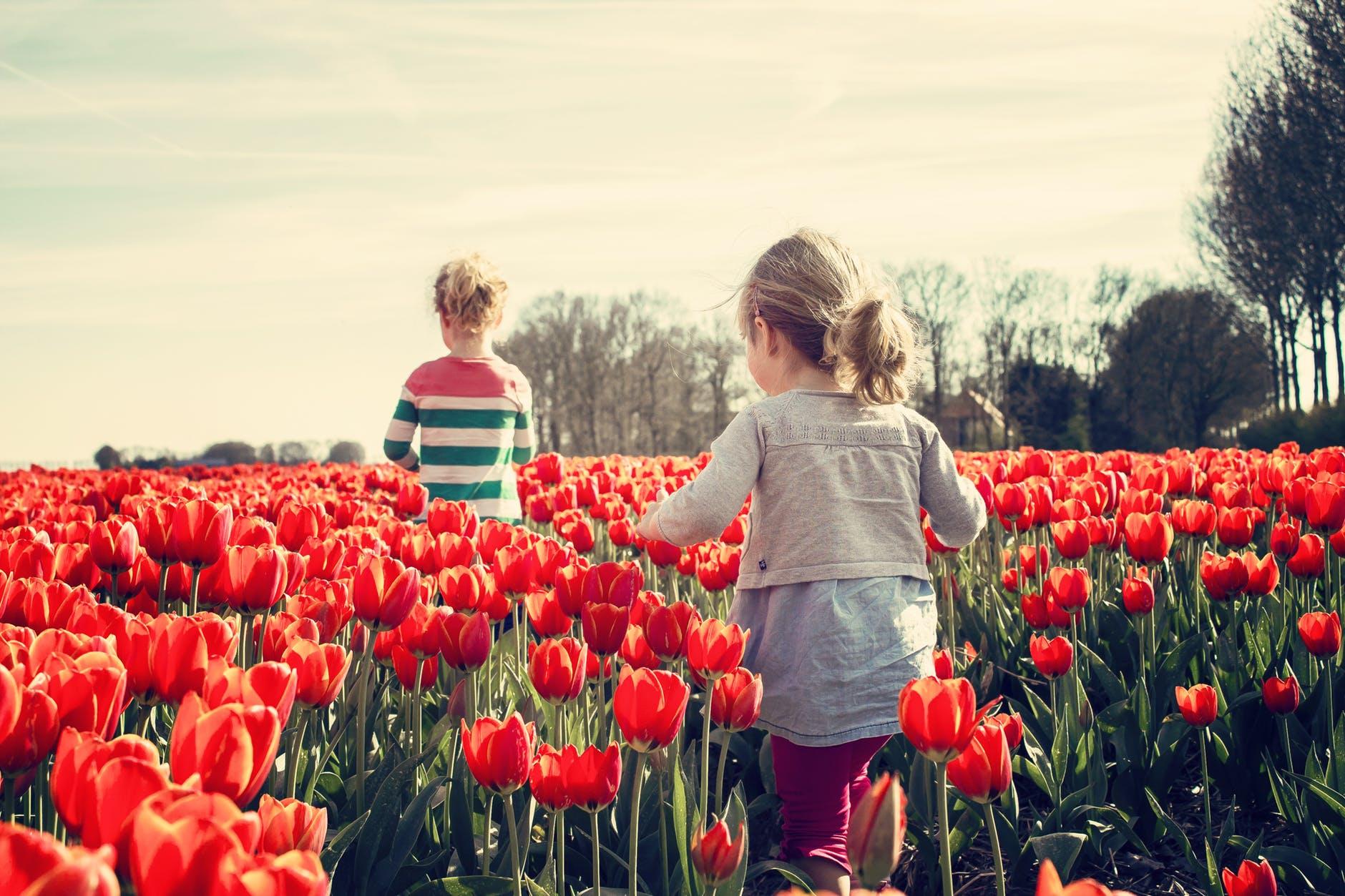 girls-children-tulips-netherlands.jpg