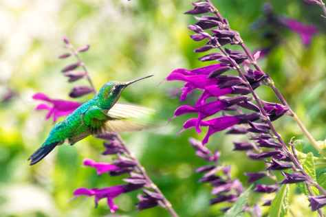 selective focus photography of hummingbird