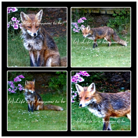 Fox for blog