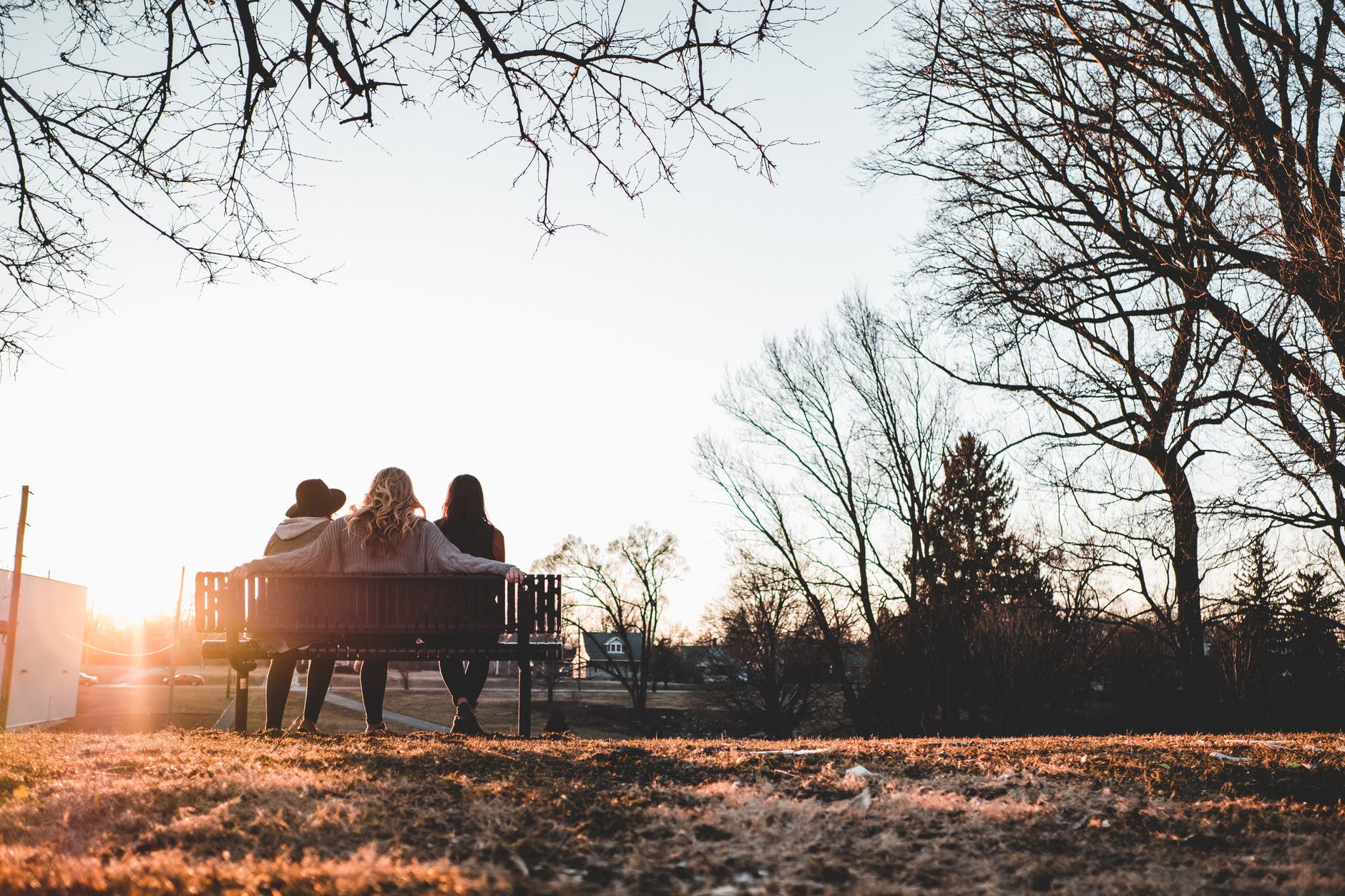 three person sitting on bench under withered trees