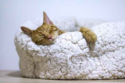 orange cat sleeping on white bed