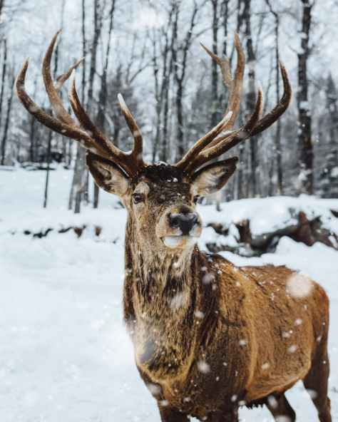 photo of deer on snow