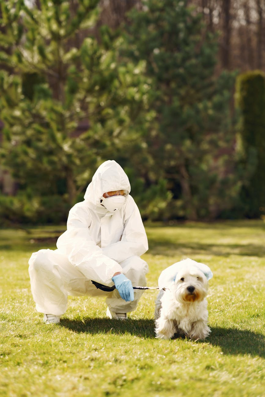 person wearing white protective suit sitting on green grass field with white dog